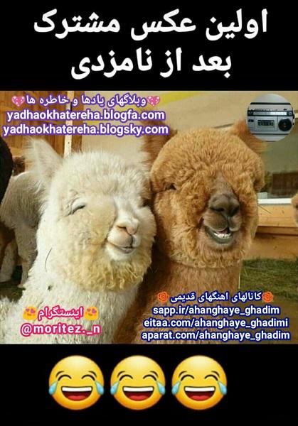 جوک،طنز،لطیفه،خنده،عکسهای خنده دار،مطالب جالب و خنده دار، باحال،مطالب طنز و خنده دار، http://yadhaokhatereha.blogfa.com